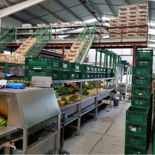 Cooperativa de Plátanos en La Palma Auditoria Energética